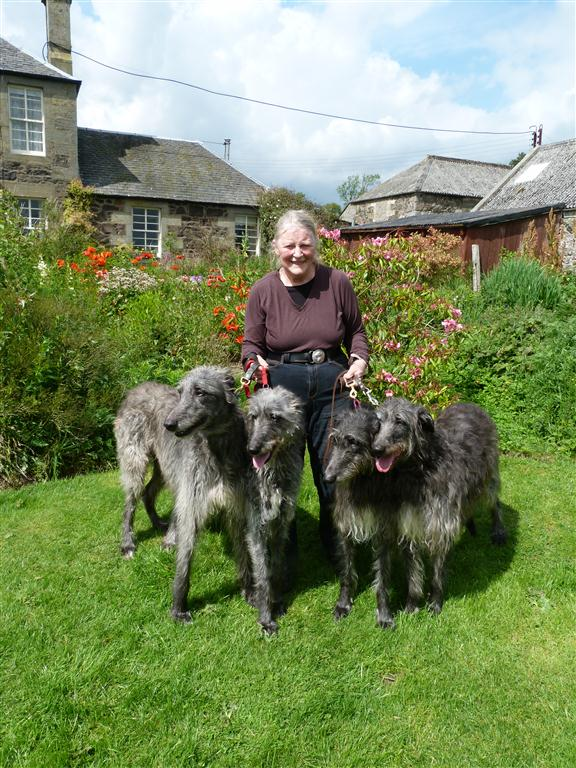 Claire and Cusidh Scottish Deerhounds